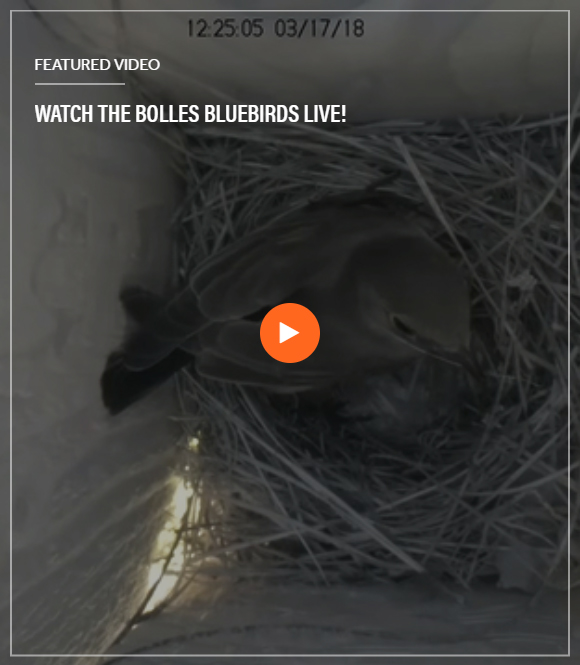 Bluebird Video Screenshot